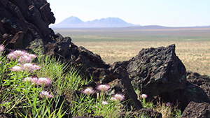 Pink flowers and black rocks in the foreground with a small mountain range far behind.