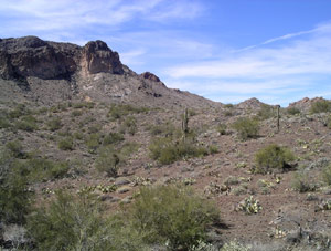 A dry reddish desert is scattered with spots of green growth.