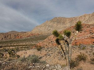Small shrubs and cacti sit on a desert floor as mountains rise to meet up with white clouds on the horizon.