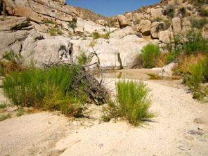 A small spring is nestled among tan desert rocks.