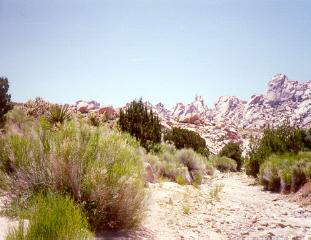 Photograph taken in  the Bristol Mountains Wilderness