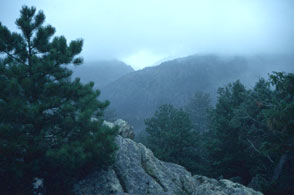 Photograph taken in  the Cache La Poudre Wilderness