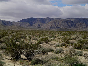 A large green plant with long sword-like leaves growing in a mountainous desert.
