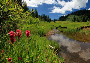 Photograph taken in  the Columbine-Hondo Wilderness