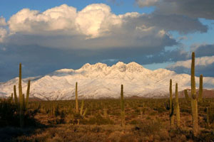 Saguaro cactus washed in golden evening light, with towering snow-covered mountains looming over the desert landscape far beyond.