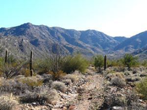 A lone path leads into a desert landscape full of cacti and shrubs.