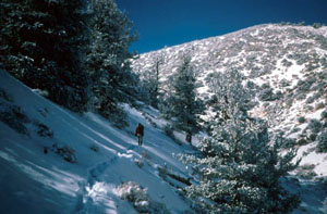 A lone hiker drudging through the snow along the side of a forested hill, another snow covered hill rises ahead, under a barren blue sky.