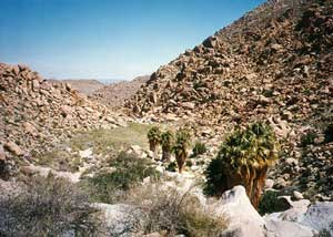 A string of four palm trees line the base of a small grassy basin, surrounded by jagged brown rock on all sides.
