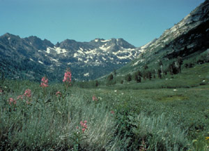 A meadow valley is framed by a sprawling vista of snow capped mountains.  In the foreground a small batch of pink flowers is blooming.