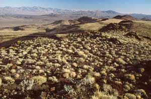 An open desert valley, small tufts of grass stretching over the rolling hills, to higher mountains along the horizon.