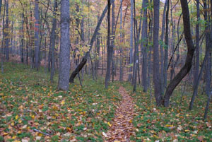 A photo of the Appalachian Trail which is a small walkway in the Jefferson National Forest in Virgina.