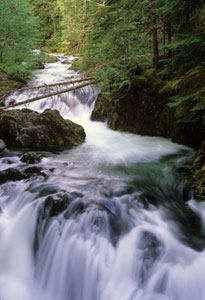 Photograph taken in  the Opal Creek Wilderness