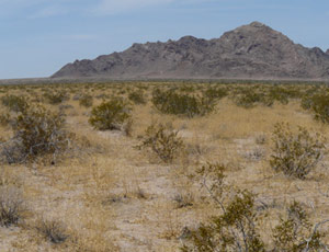 A brush covered desert is seen, but the focus is the somewhat forbidding mountains in the background.