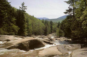 A shallow brook runs over large boulders, surrounded by dense trees on a clear sunny day.