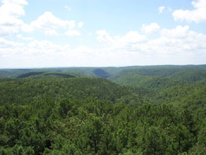 Treetop view from Pineview Tower captures the dense population of trees in the Piney Creek Wilderness.