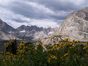 A large patch of yellow wildflowers in the foreground, looking out to high barren cliffs in the distance, under a stormy sky.