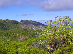 An elderberry bush appears in the foreground in front of lush hills.