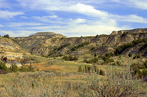 Looking past a large tree trunk to an open forest beyond, surrounded by a bed of dense green undergrowth.