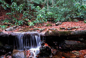 A tiny stream of water cascades over over a fallen tree trunk creating a small water fall. Red leaves float on top of the water's surface and near the water's edge are lush, green shrubery.