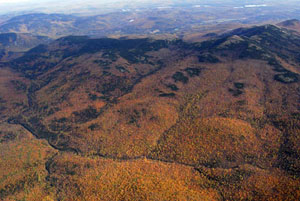 Ariel view of fall foliage.