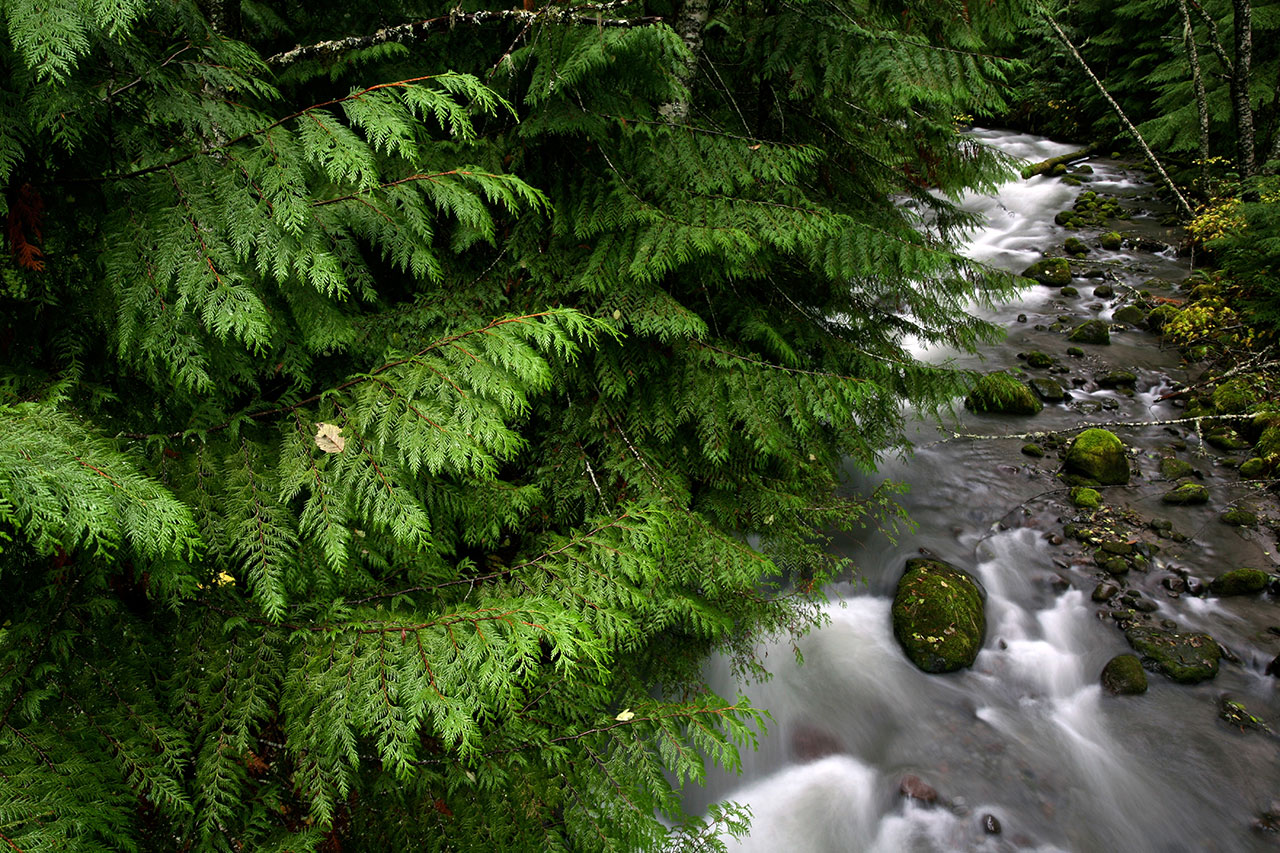 Water flowing through ferns