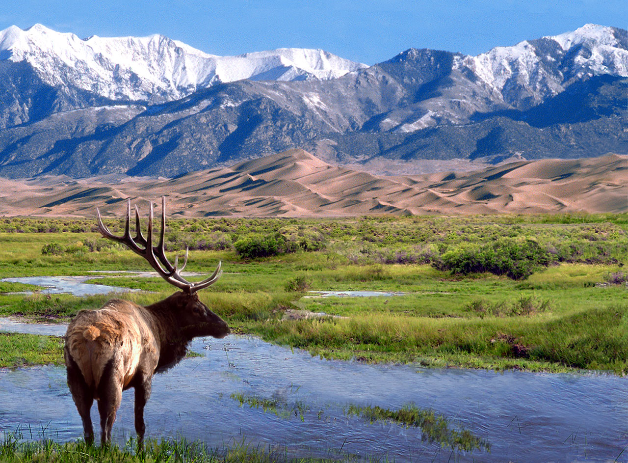Elk standing in front of sand dunes and mountains