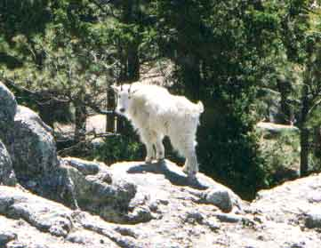 Photograph taken in  the Black Elk Wilderness