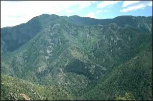 Photograph taken in  the Blue Range Wilderness