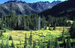 A small alpine meadow surrounded by evergreen forest, at the base of a small valley surrounded by jagged mountain ridges.