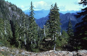 A tall trees border a view out over a deep valley, bordered by steep forested mountains.