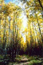 Photograph taken in  the Escudilla Wilderness