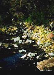 Photograph taken in  the Fishhooks Wilderness