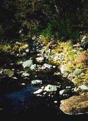 Photograph taken in  the Fishhooks Wilderness