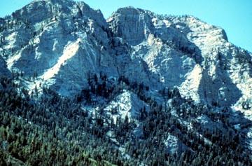 Photograph taken in  the Grant Range Wilderness