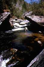 Photograph taken in  the Joyce Kilmer-Slickrock Wilderness