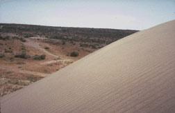 Photograph taken in  the Juniper Dunes Wilderness