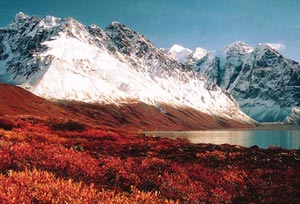Snowcapped mountains rise sharply beyond a lake with intense red autumn plants in the foreground.