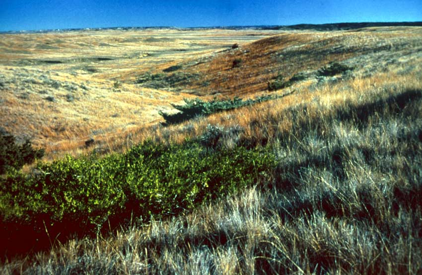 A green shrub contrasts against the surrounding brown and gray grass, stretching off to the blue horizon.