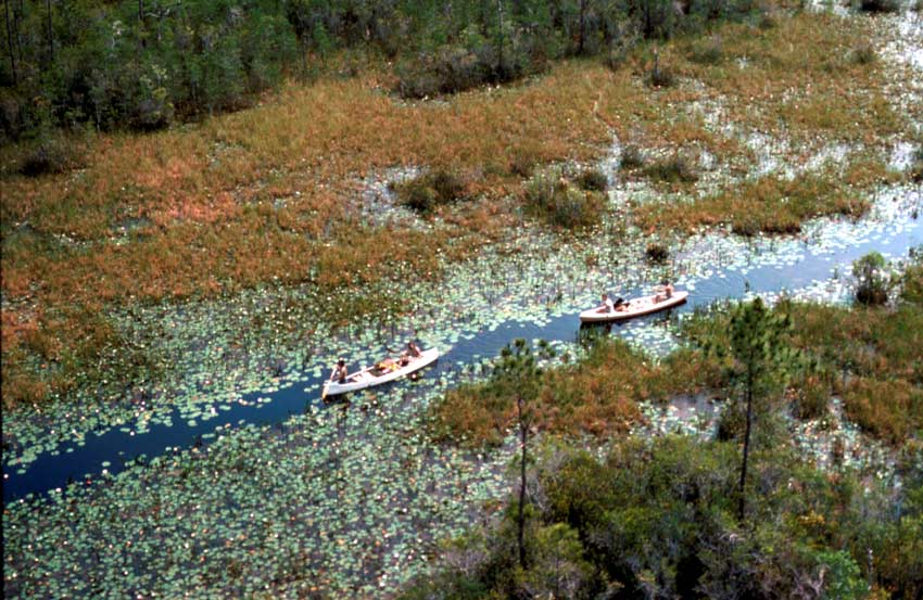 An aerial view looking down at a dense swamp, with two canoes navigating along a narrow channel through lily pads.