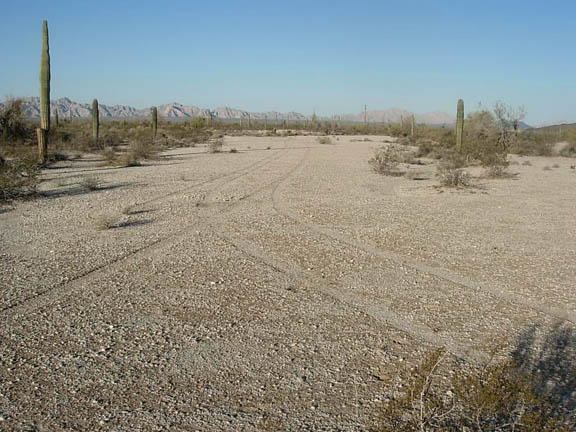 The desert floor reveals many tire tracks. Cacti and other desert shrubs dot the landscape.