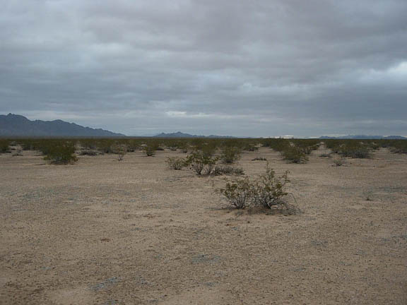 The desert floor, dotted with shrubs, spreads out toward the horizon where mountains jut out from the flatlands on a cloudy day.
