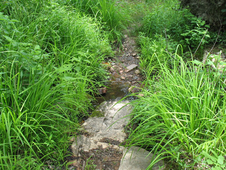 A small streambed winding its way through lush green grass.