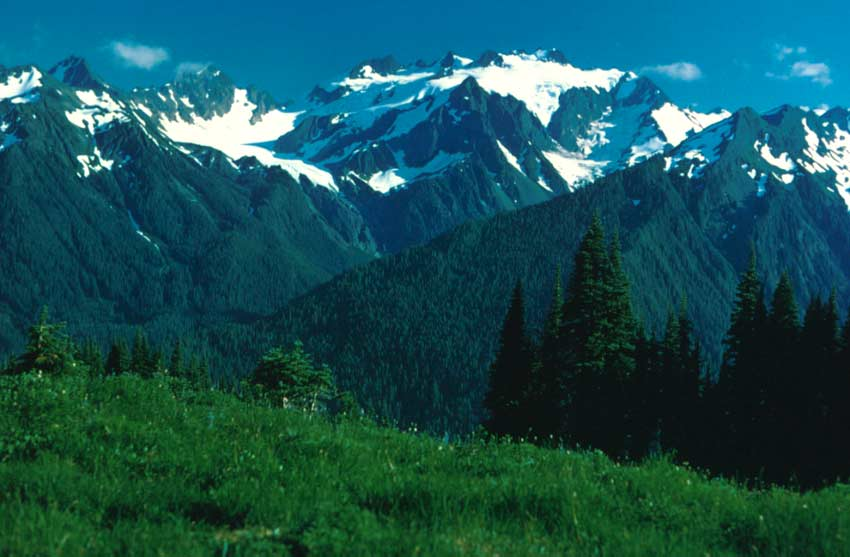 View from a lush alpine meadow, across a massive forest valley, to a huge snowcapped mountain rising on the other side.
