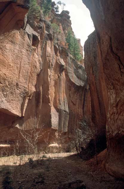 Viewing up from a narrow slot canyon, vertical walls rising up towards green trees above.