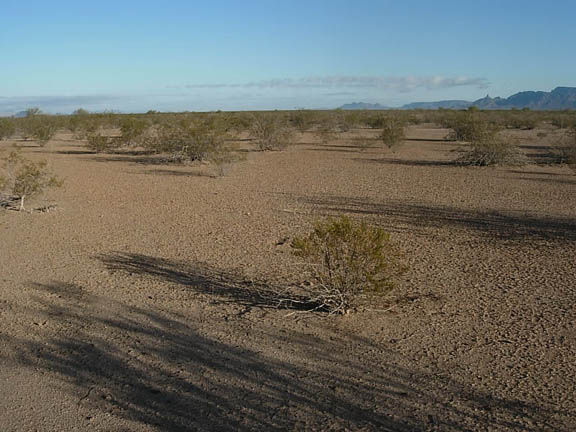 The growler valley, sprouting shrubs, on a clear sunny day.