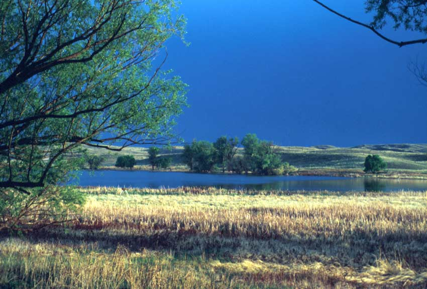 Looking out over a large marshy pond, surrounded by sparse trees and rolling grassy hills, under a dark blue stormy sky.
