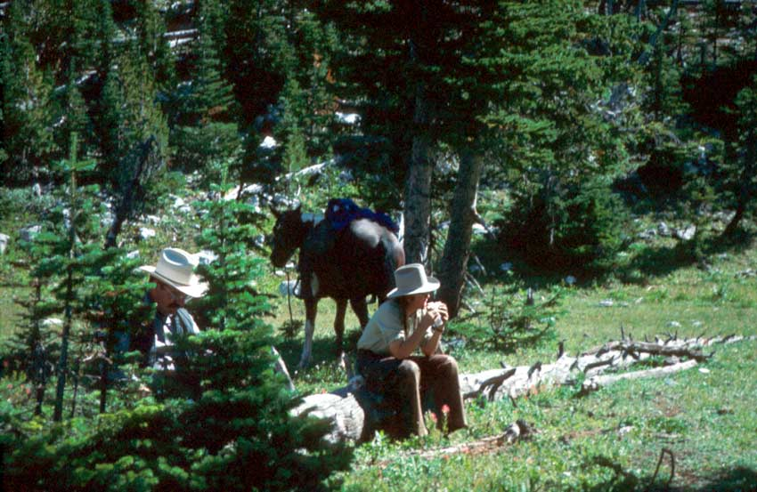 Two people seated on a fallen tree eating lunch. A horse stands in the background, tethered to a large pine tree.