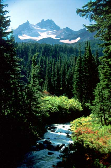 Viewing over a small rushing stream, up a dense forest valley to a rugged snowcapped peak in the distance.