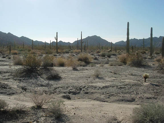 The desert landscape houses cacti and other shrubs. The Cabeza Prieta Mountains outline the horizon beyond the flatlands.