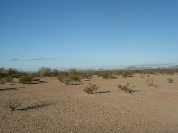 A photo of the flatland of the Cabeza Prieta Wilderness where shrubs sprout out of the ground.